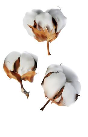 raw material: Cotton, icon