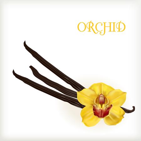 flor de vainilla: de flores y vainas de vainilla aislados en el fondo blanco