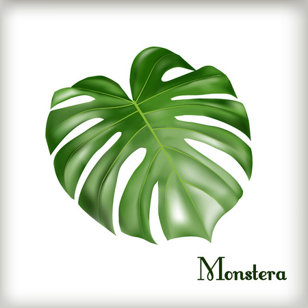 Tropical Leaf Monstera