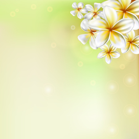 Plumeria flower. Frangipani Ilustrace