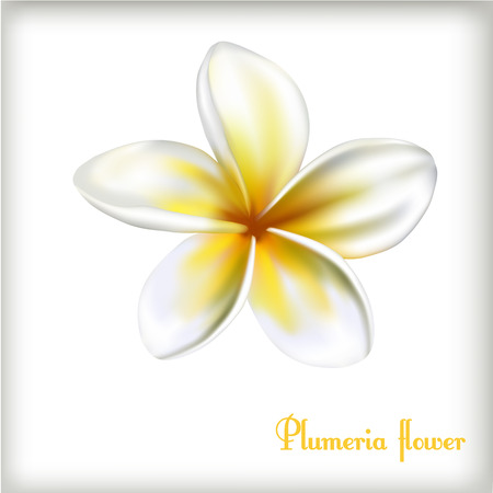 Frangipani Plumeria flower on the isolated white background. Vector botanic Illustration. Perfect for advertisement, spa salon or travelling agency Ilustrace
