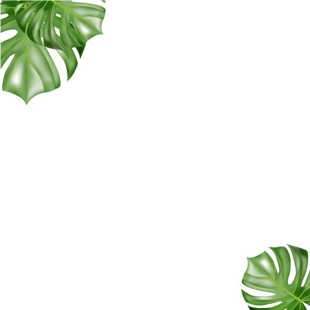 Tropical paper palm leaves frame. Summer tropical leaf.