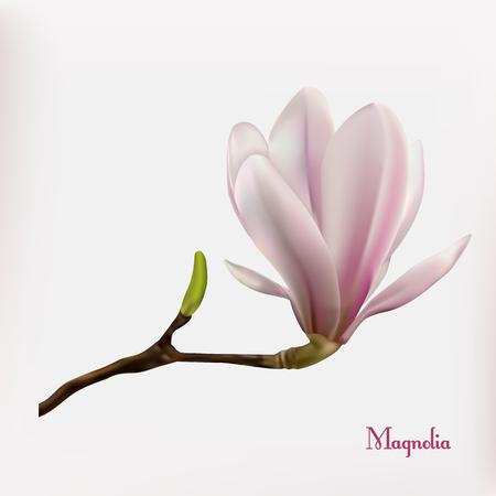 Beau fond de magnolia rose. Vecteur