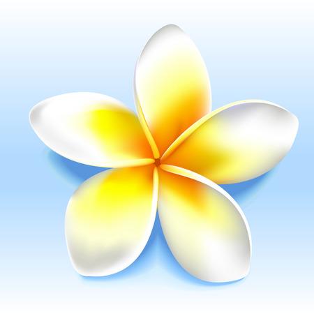 Gelbe Blume. Standard-Bild - 56605322