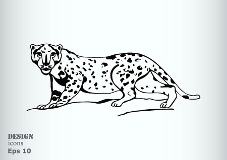 prey: Vector illustration of an evil, wild, aggressive leopard. Prey, cheetah dangerous. Offensive cougar. Panther.