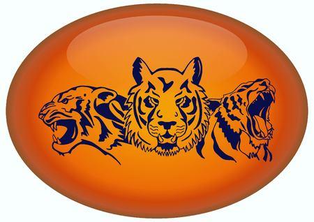 savage: Vector illustration of an evil, savage, aggressive tiger. Predatory, dangerous beast.
