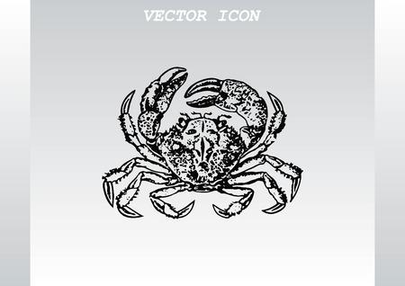 crustacea: Vector illustration of a crab.  graphics, seafood. Marine reptile. Illustration