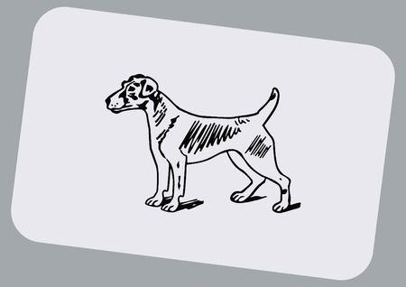 purebred: Vector illustration of a dog. Aggressive purebred dog. Illustration