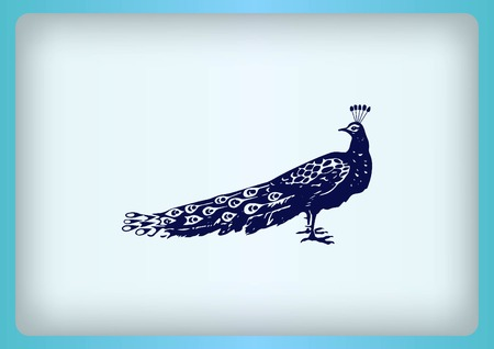barn swallow: Bird icon. Peacock vector illustration. Illustration