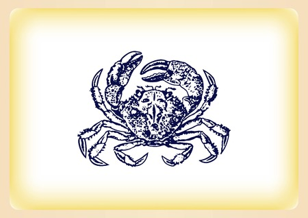 crustacea: Vector illustration of a crab. , graphics, seafood. Marine reptile.