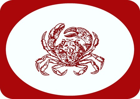 crustacea: Vector illustration of a crab. graphics, seafood. Marine reptile.