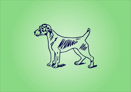 aggressive: Vector illustration of a dog. Aggressive purebred dog. Illustration