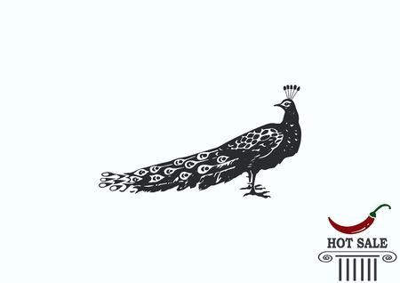 Bird icon. Peacock vector illustration. Illustration