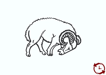 Vector illustration of a sheep. Flock of sheep. Illustration