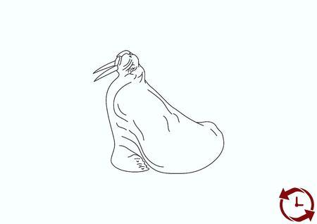 crustacea: Walrus, seal icon. Vector illustration. Illustration
