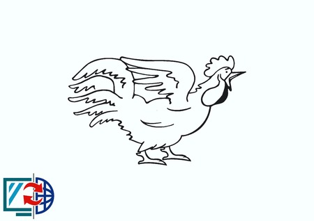 drake: Poultry icon. Vector illustration. Chicken icon. Rooster icon.