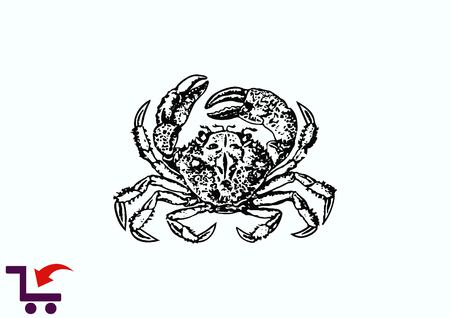 Vector illustration of a crab.  graphics, seafood. Marine reptile. Illustration