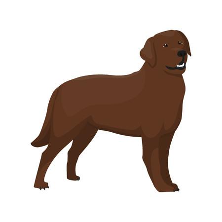 companionship: Vector illustration of Labrador