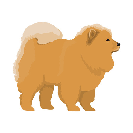 companionship: Vector illustration of Chow-chow