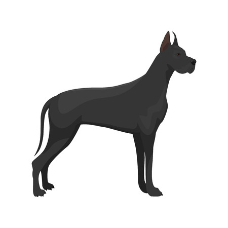1 173 great dane stock illustrations cliparts and royalty free rh 123rf com great dane clipart free great dane graphics clipart