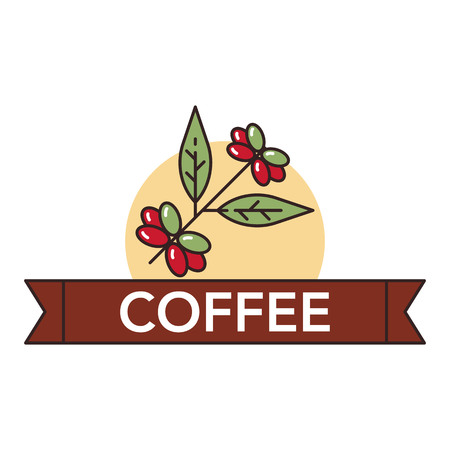 Vector illustration of cocoa berries on white background with lettering. Coffee production and consumption topic. Illustration
