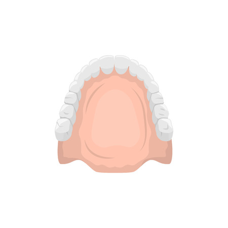 Vector illustration of a false jaw on white background. Dentistry topic.