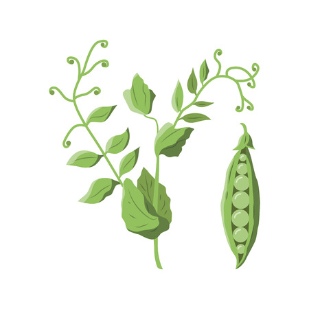 Vector illustration of a pees plant on white background. Vegetables and gardening topic. Illustration