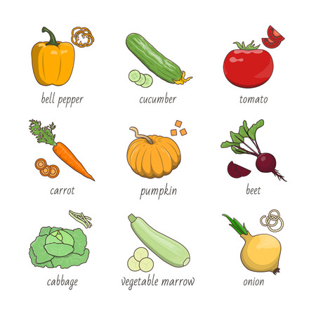 Fresh vegetables vector illustrations set on white background. Healthy food and kitchen topic. Illustration