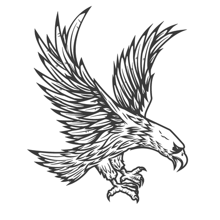 Illustration of flying eagle isolated on white background. Vector illustration. Ilustração