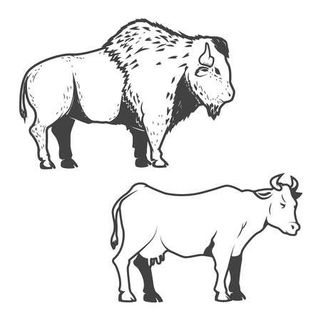 Cow and buffalo icons isolated on white background. Bizon. Design element , label, sign, brand mark. Vector illustration.