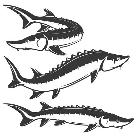 Set of sturgeon icons isolated on white background. Design elements , label, emblem, sign, brand mark. Vector illustration. Vettoriali