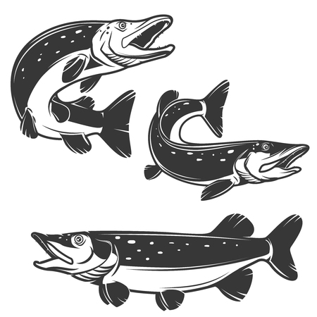 Set of pike fish icons isolated on white background. Design elements , label, emblem, sign, brand mark. Vector illustration.