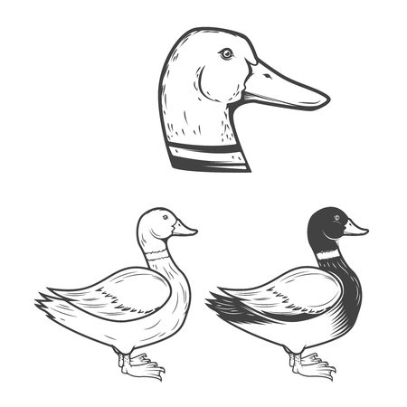 Set of the duck illustrations isolated on white background. Design elements for label, emblem, sign, brand mark, poster.