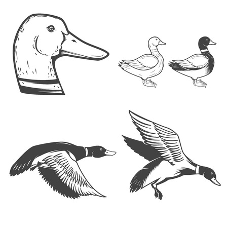 Set of wild ducks icons isolated on white background. Duck hunting. Design elements for label, badge, sign. Illustration