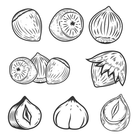 nutty: Set of hazelnuts icons isolated on white background. Design elements for label, emblem, sign, poster.