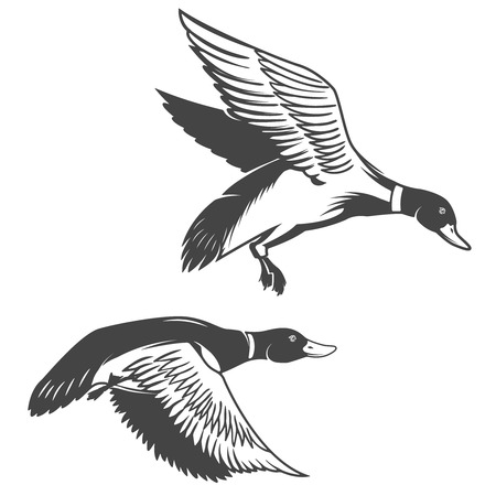 Ensemble d'icônes de canards sauvages isolés sur fond blanc. Éléments de design pour étiquette, emblème, signe, marque.