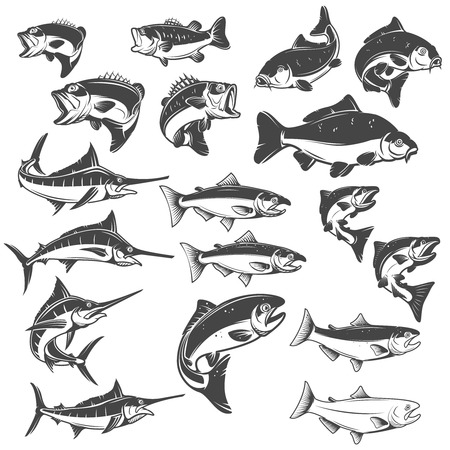 Fish illustrations on white background. Carp, bass fish, trout, salmon, sword fish icons. Design elements for label, emblem.