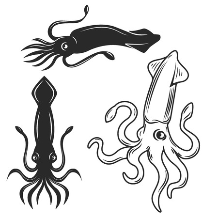 Set of the squid illustrations isolated on white background. Design elements for label, emblem, sign, brand mark.