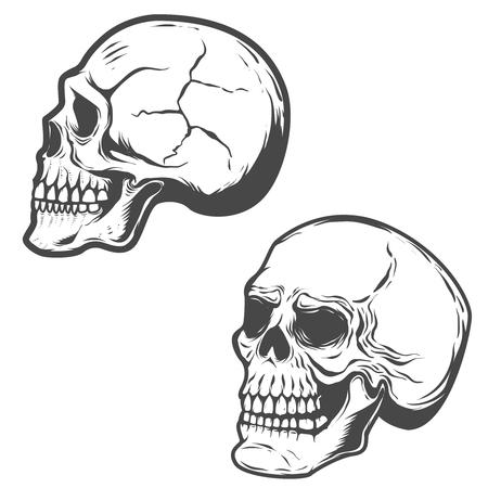 白い背景に分離されたベクトル頭蓋骨のセットです。  イラスト・ベクター素材