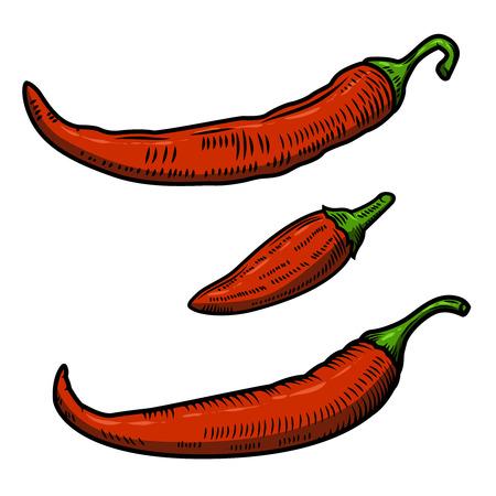 capsaicin: Set of Chili pepper illustration isolated on white background. Design element for poster, menu.