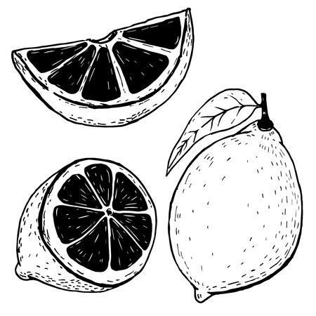 Set of hand drawn lemons isolated on white background. Vector illustration