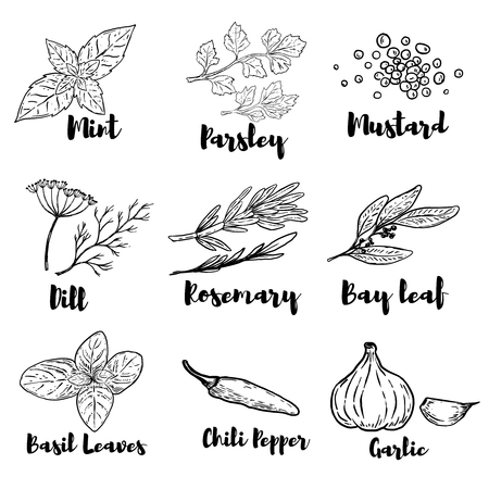 Set of spice and herbs illustrations isolated on white background. Design elements for poster, menu. Vector illustration Çizim