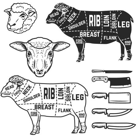 子羊は、肉屋の図をカットします。ポスター、デザイン要素メニュー。ベクトル図  イラスト・ベクター素材