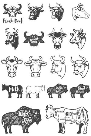 Big set of cow heads and silhouettes. Design elements for logo, label, emblem, sign. Vector illustration