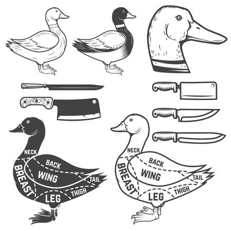 Duck butcher diagram. Design element for poster, menu. Vector illustration