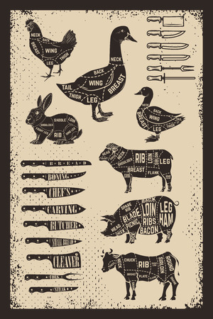 Diagram guide for cutting meat on grunge background. Butchery tools and design elements. Vector illustration