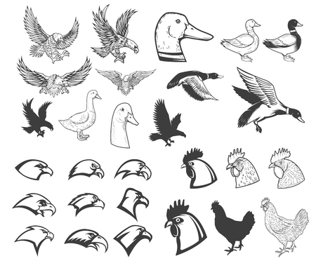 Set of birds illustrations. Eagle, duck, goose, chicken. Design elements for logo, label, badge, emblem, sign, menu, poster.