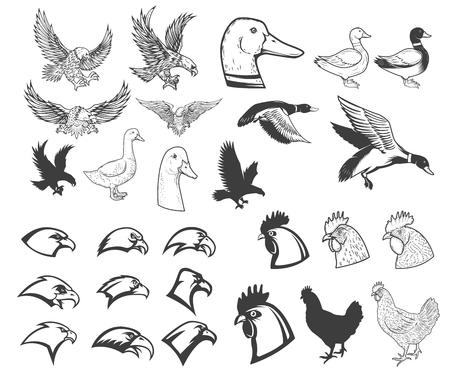 Set van vogels illustraties. Adelaar, eend, gans, kip. Ontwerpelementen voor logo, label, badge, embleem, teken, menu, poster.