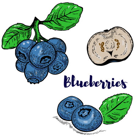 Set of colorful blueberries illustrations isolated on white background. Design elements for poster, menu. Vector illustration