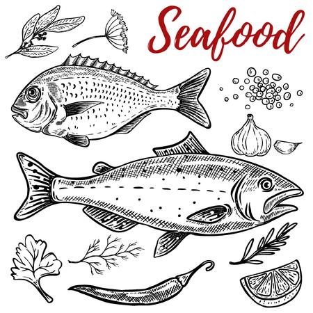 Set of hand drawn seafood illustrations isolated on white background. Design elements for poster, emblem, restaurant menu. Vector illustration Illustration